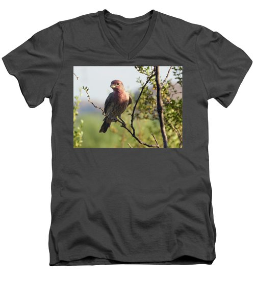 Young Male House Finch Men's V-Neck T-Shirt