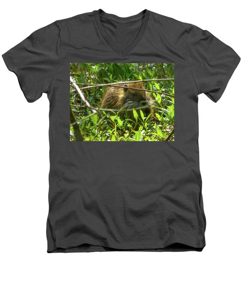Young Nutria In Love Men's V-Neck T-Shirt by Kimo Fernandez