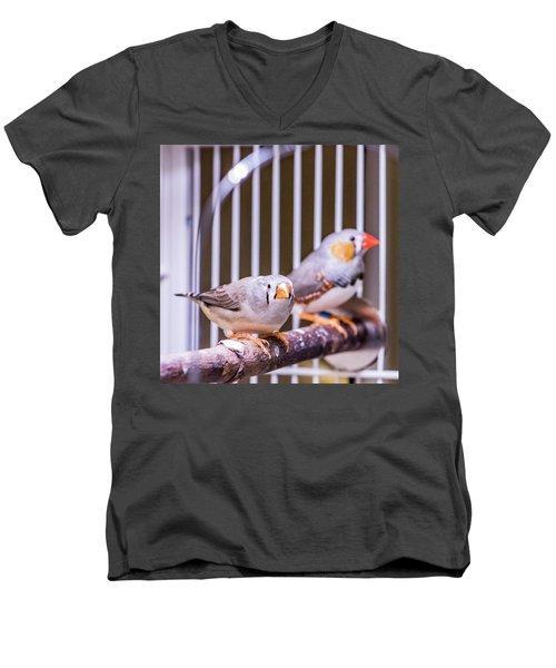 Zebra Finch Pair Men's V-Neck T-Shirt