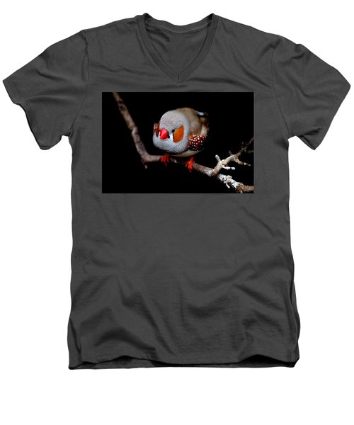 Zebra Finch Men's V-Neck T-Shirt