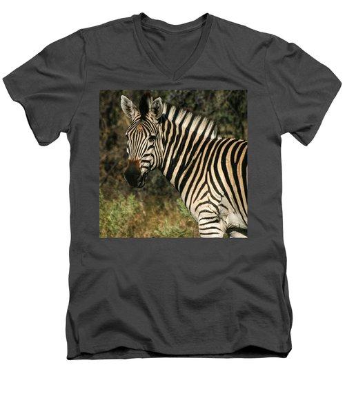 Zebra Watching Sq Men's V-Neck T-Shirt