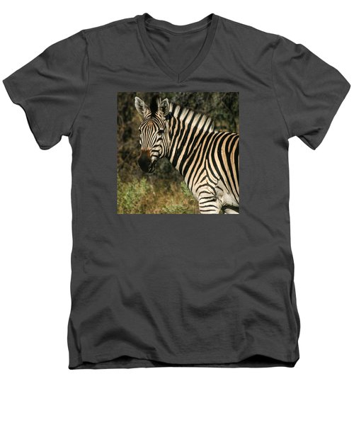 Zebra Watching Sq Men's V-Neck T-Shirt