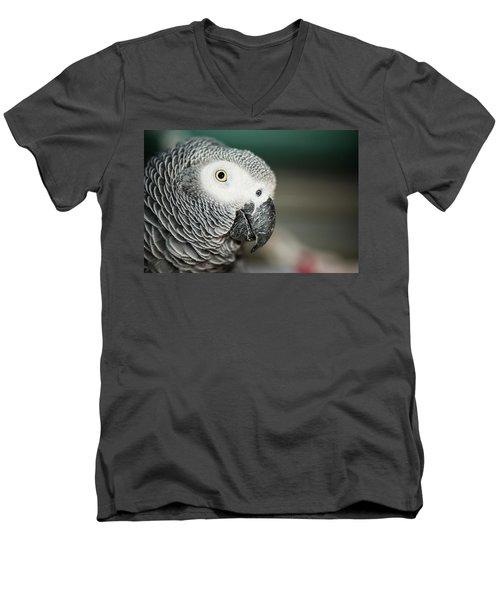 Close Up Of An African Grey Parrot Men's V-Neck T-Shirt