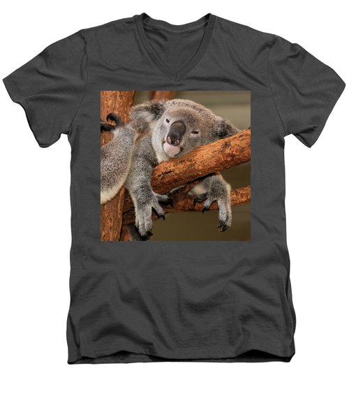 Cute Australian Koala Resting During The Day. Men's V-Neck T-Shirt