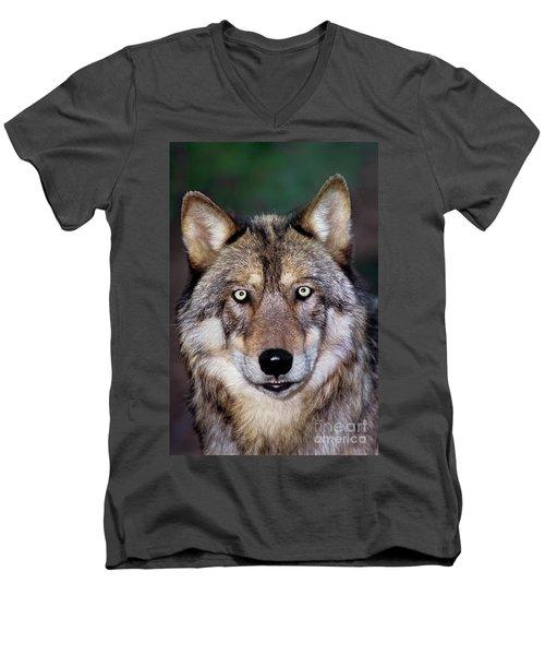 Gray Wolf Portrait Endangered Species Wildlife Rescue Men's V-Neck T-Shirt