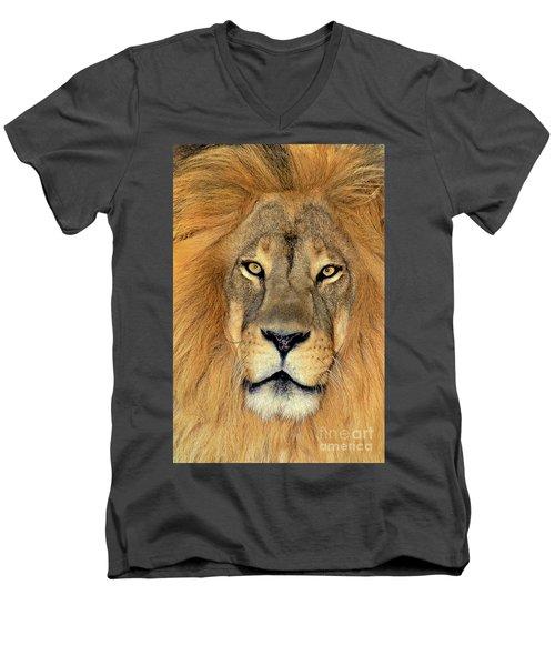 African Lion Portrait Wildlife Rescue Men's V-Neck T-Shirt