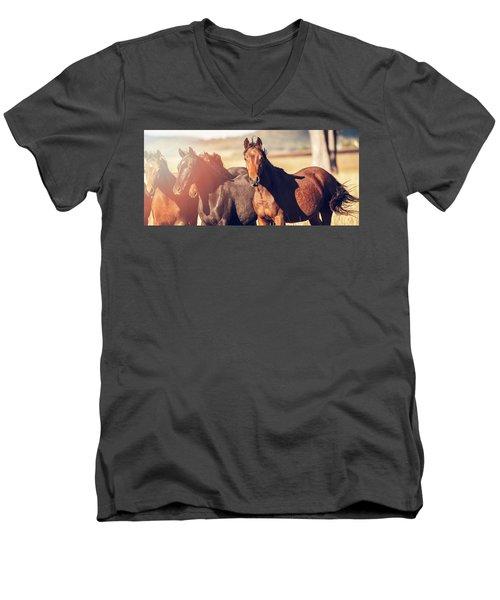 Australian Horses In The Paddock Men's V-Neck T-Shirt