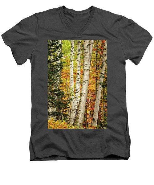 Autumn Birch Men's V-Neck T-Shirt