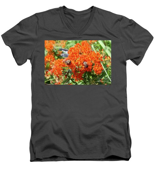 Bees Men's V-Neck T-Shirt