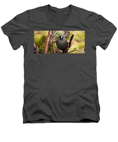 Black Currawong Men's V-Neck T-Shirt