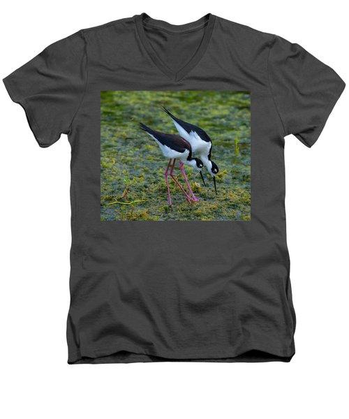 Black-necked Stilts Men's V-Neck T-Shirt