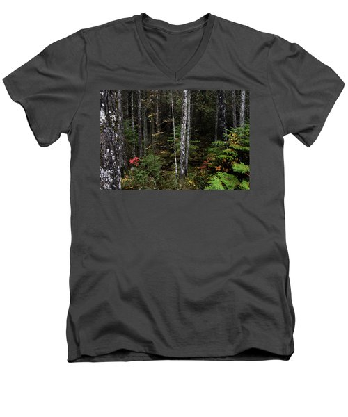 Men's V-Neck T-Shirt featuring the photograph Black Spruce Forest 10121801 by Rick Veldman
