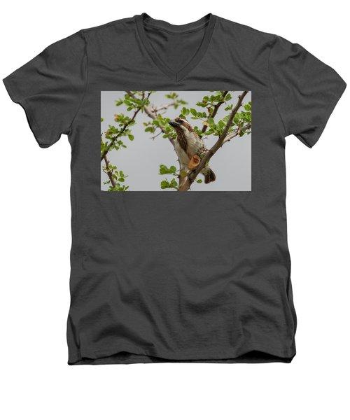 Black-throated Barbet Men's V-Neck T-Shirt