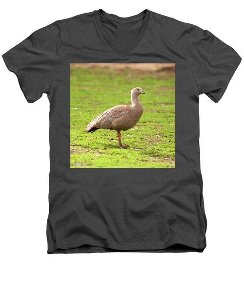 Cape Barron Goose Men's V-Neck T-Shirt