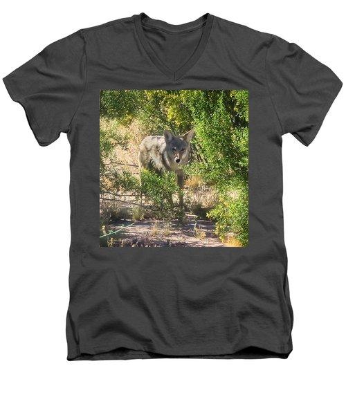 Cautious Coyote Men's V-Neck T-Shirt