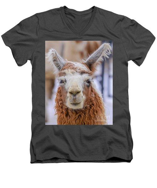 Cute Llama Men's V-Neck T-Shirt