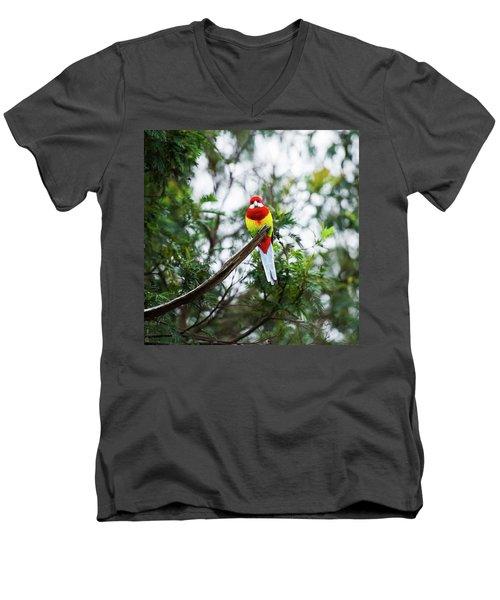 Eastern Rosella Men's V-Neck T-Shirt