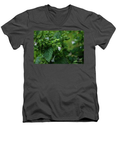 Euphrasia Men's V-Neck T-Shirt