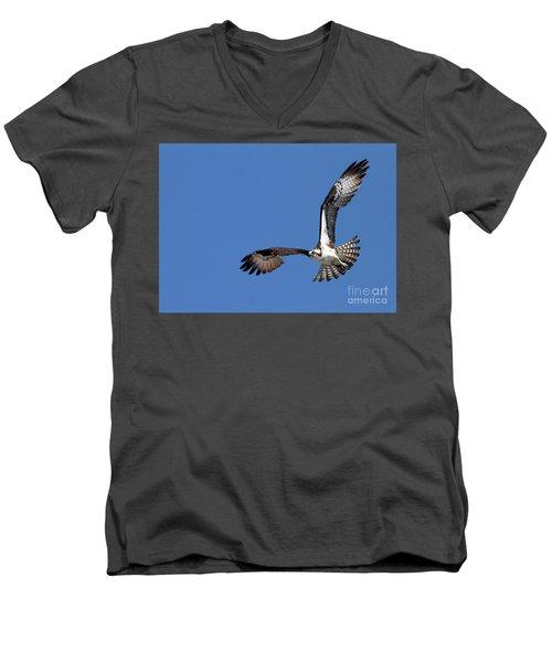 Focused Osprey Men's V-Neck T-Shirt