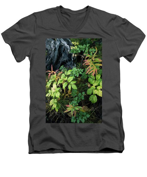 Forest Floor In Early Autumn Men's V-Neck T-Shirt