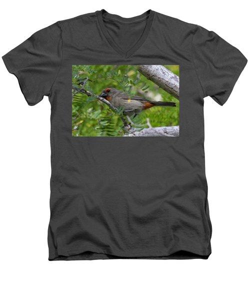 Greater Antillean Bullfinch Men's V-Neck T-Shirt