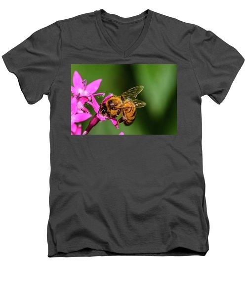 Honey Bee Men's V-Neck T-Shirt