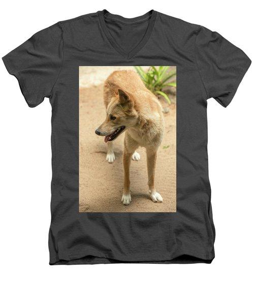 Large Australian Dingo Outside Men's V-Neck T-Shirt