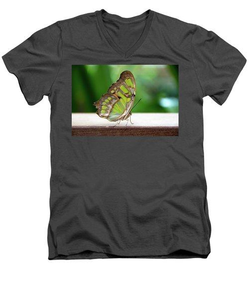 Malachite Butterfly Profile Men's V-Neck T-Shirt