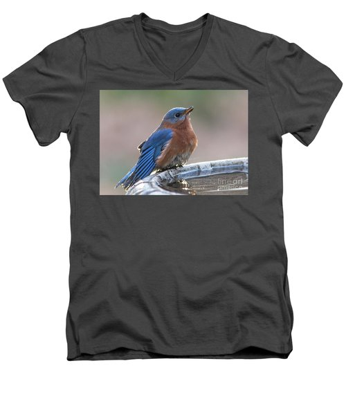 Male Eastern Blue Bird Men's V-Neck T-Shirt