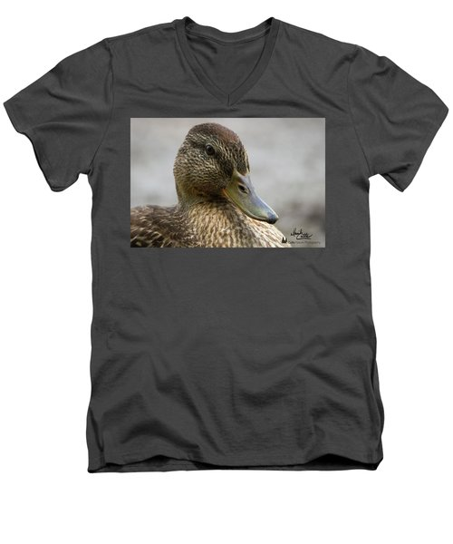 Mallard Hen Men's V-Neck T-Shirt