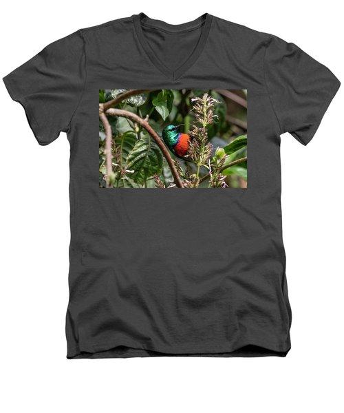 Northern Double-collared Sunbird Men's V-Neck T-Shirt