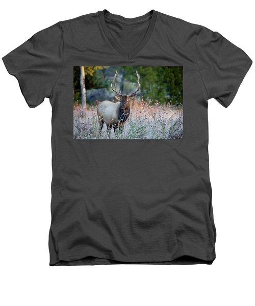 Rocky Mountain Wildlife Bull Elk Sunrise Men's V-Neck T-Shirt