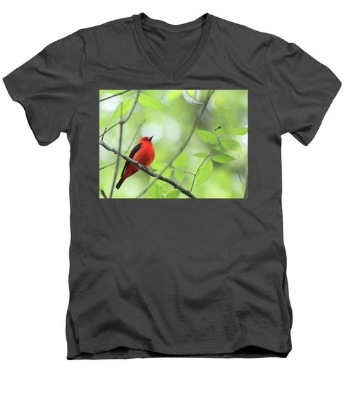 Scarlet Tanager Men's V-Neck T-Shirt