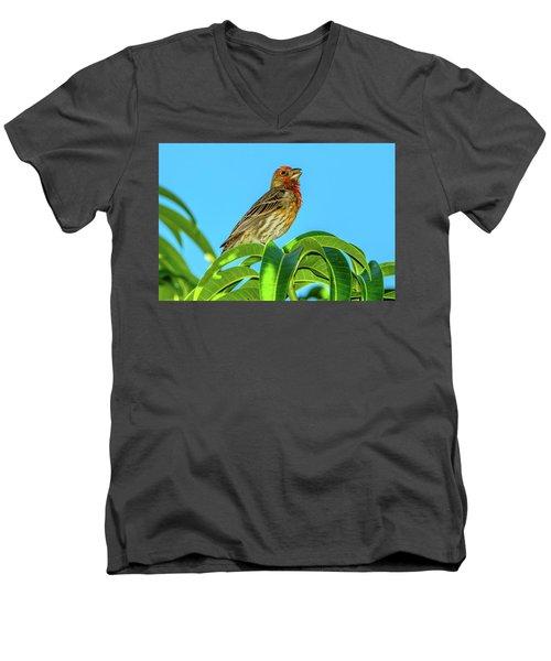 Singing House Finch Men's V-Neck T-Shirt