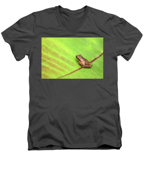 Men's V-Neck T-Shirt featuring the photograph Spring Peeper Hyla Crucifer by Rick Veldman