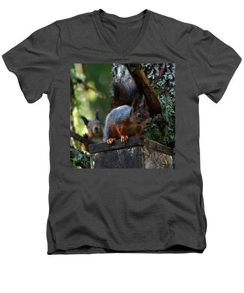 Squirrels Men's V-Neck T-Shirt