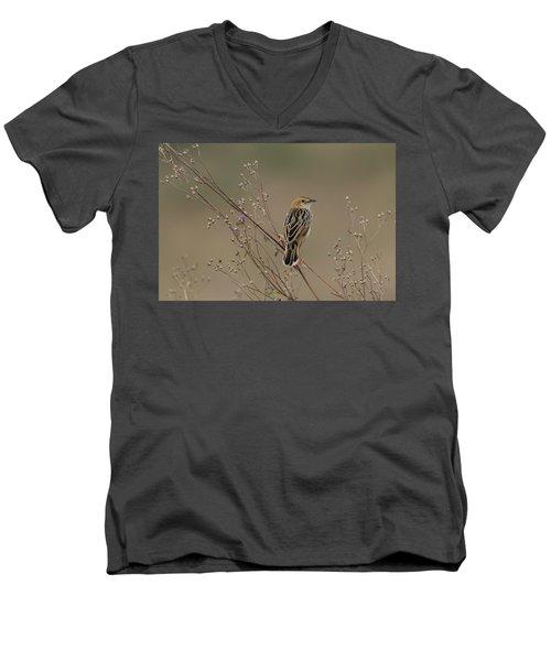 Stout Cisticola Men's V-Neck T-Shirt