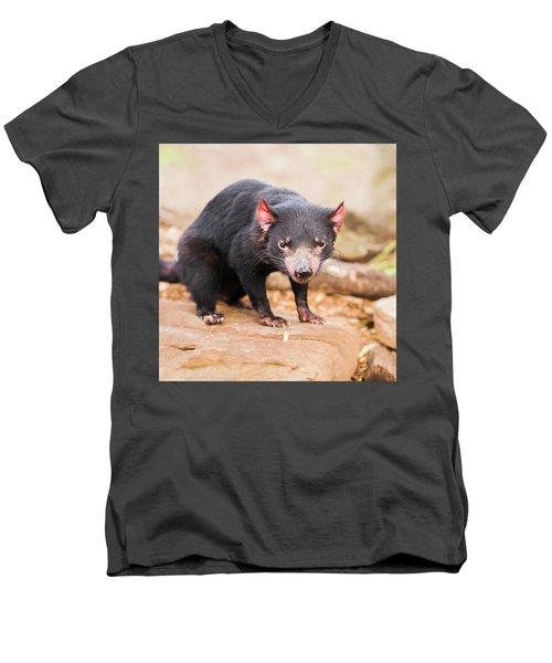 Tasmanian Devil In Hobart, Tasmania Men's V-Neck T-Shirt