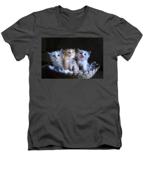 Three Little Kitties Men's V-Neck T-Shirt