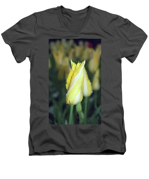Twisted Yellow Tulip Men's V-Neck T-Shirt