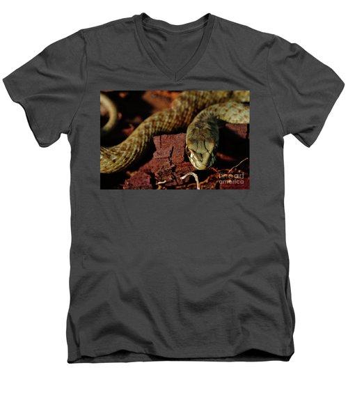 Wild Snake Malpolon Monspessulanus In A Tree Trunk Men's V-Neck T-Shirt