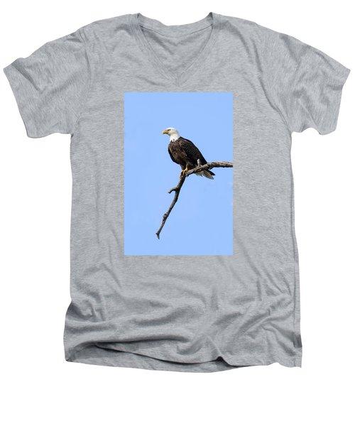 Bald Eagle 6 Men's V-Neck T-Shirt by David Lester