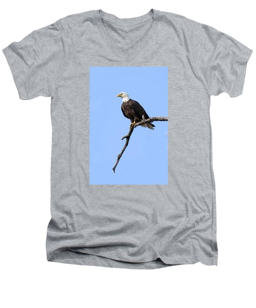 Bald Eagle 6 Men's V-Neck T-Shirt