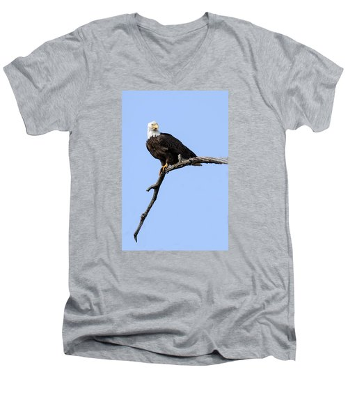 Bald Eagle 7 Men's V-Neck T-Shirt by David Lester