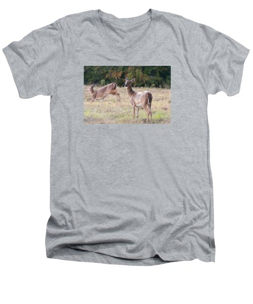 Men's V-Neck T-Shirt featuring the photograph Deer At Paynes Prairie by Paul Rebmann