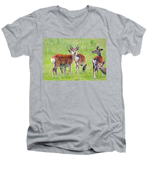 Fallow Deer Men's V-Neck T-Shirt