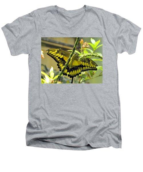 Giant Swallowtail Men's V-Neck T-Shirt
