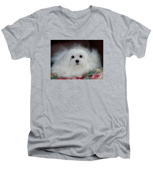 Snowdrop The Maltese Men's V-Neck T-Shirt