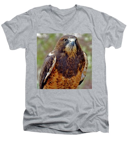 Swainson's Hawk Men's V-Neck T-Shirt