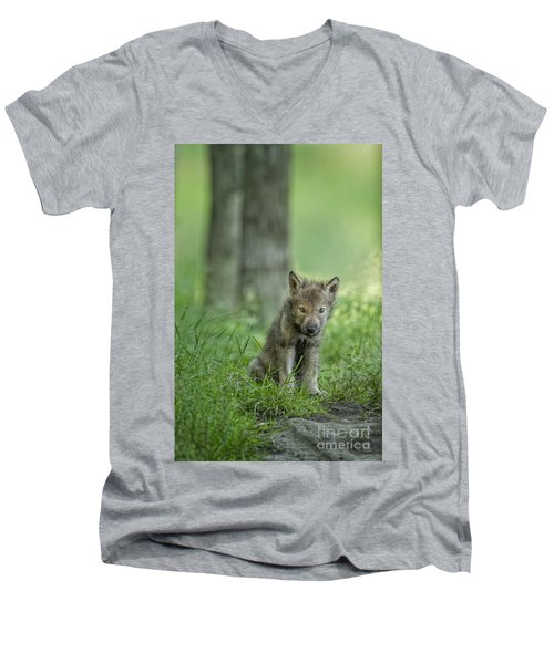 Timber Wolf Pup Men's V-Neck T-Shirt
